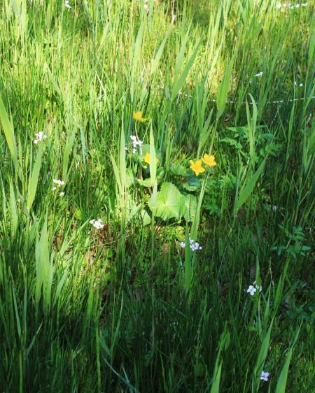 Fen meadow flora