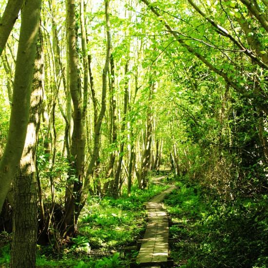 Wet woodland Upton Fen