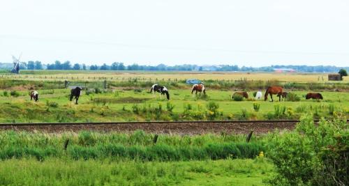 Halvergate Horses