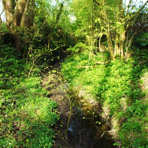 Spring rising in Saxlingham