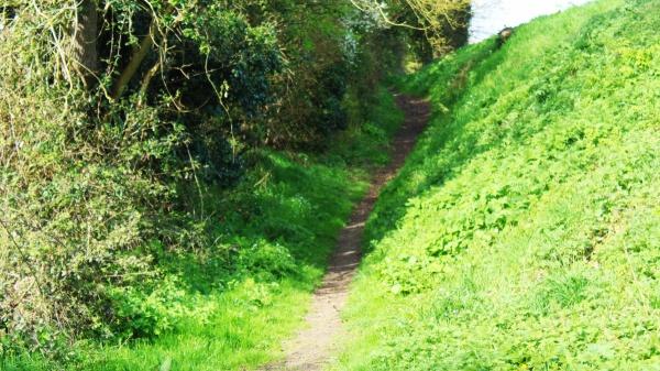 Green Lane, Saxlingham