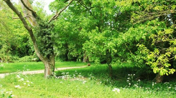 Eastgate (Saxlingham) Green