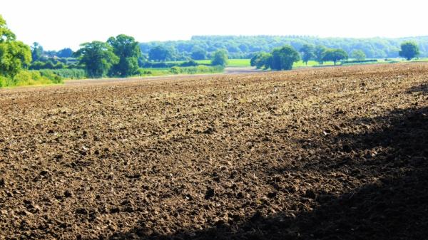 Saxlongham field south of Broad Slough