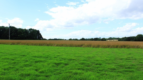 Field north of church ruins, Saxlingham