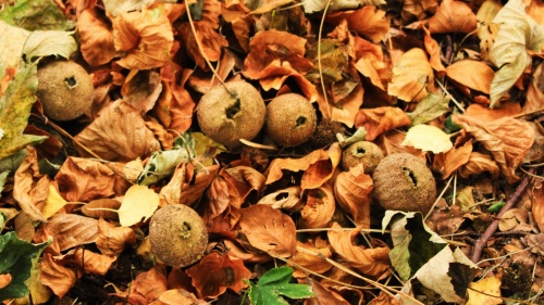 Leaves and Fungi, image of autumn