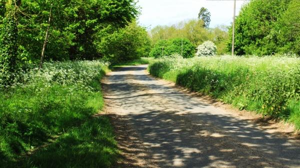 Saxlingham Green