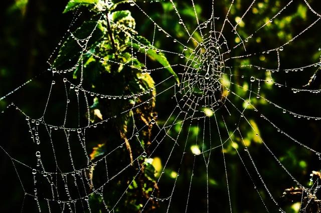 dew sparkled web