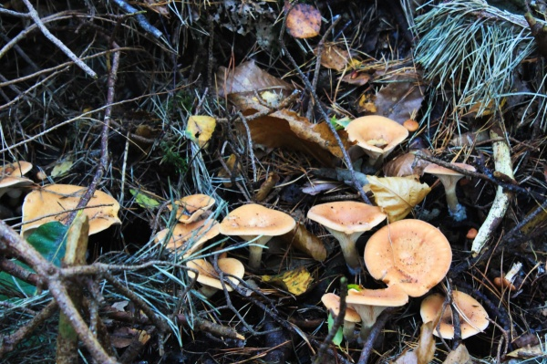 Funnel Fungi
