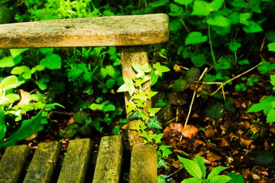 ivy climbs seat