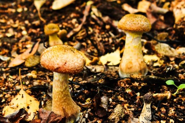Skittle-shaped fungi