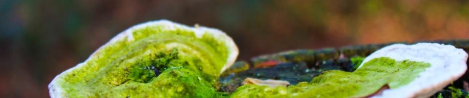 green fungi 1