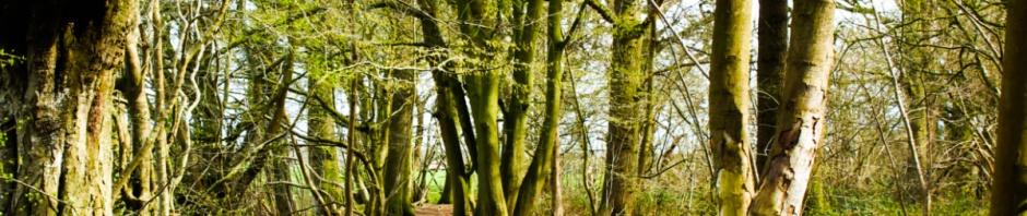 Tyrrel's Wood