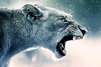 roar-by satyariwari