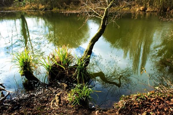 Up A Creek