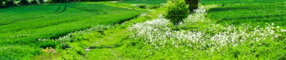 Winding grassy way
